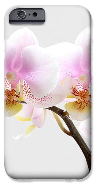Blooms on White iPhone Case by Juergen Roth