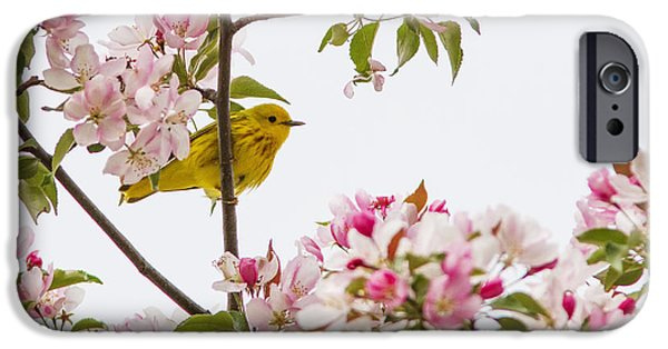 Warbler iPhone Cases - Blossom and bird iPhone Case by Mircea Costina Photography
