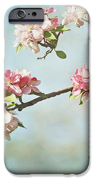Blossom Branch iPhone Case by Kim Hojnacki