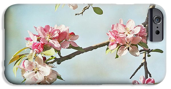 Close Up Floral iPhone Cases - Blossom Branch iPhone Case by Kim Hojnacki