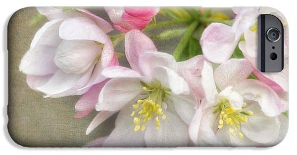 Cherry Blossoms iPhone Cases - Blossom Festival iPhone Case by Kim Hojnacki