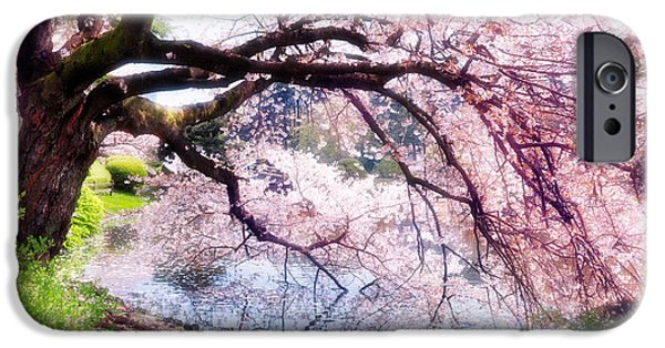 Shinjuku iPhone Cases - Blossoming cherry tree touching water iPhone Case by Oleksiy Maksymenko