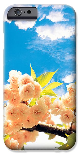 Cut-outs iPhone Cases - Blossoms Against Sky iPhone Case by Panoramic Images