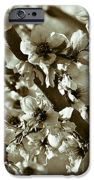 Blossoms iPhone Case by Frank Tschakert