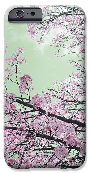 Guy Ricketts Photography iPhone Cases - Blossoms Passing Fair iPhone Case by Guy Ricketts