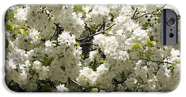 Botanical iPhone Cases - Blossoms iPhone Case by Tony Cordoza