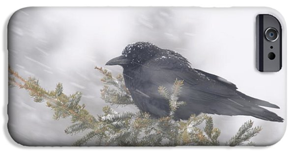Sandra Updyke iPhone Cases - Blowin in the wind - crow iPhone Case by Sandra Updyke