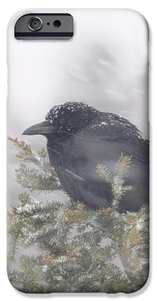 Blowin' in the wind - crow iPhone Case by Sandra Updyke