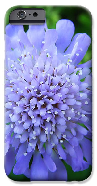 Blue iPhone Case by Aimee L Maher Photography and Art