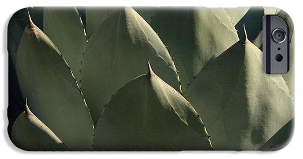 Rosette iPhone Cases - Blue Aloe iPhone Case by Ellen Henneke
