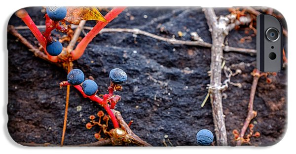 Grapevine Red Leaf iPhone Cases - Blue Autumn Ivy Berries on a Stone Wall iPhone Case by Chris Bordeleau