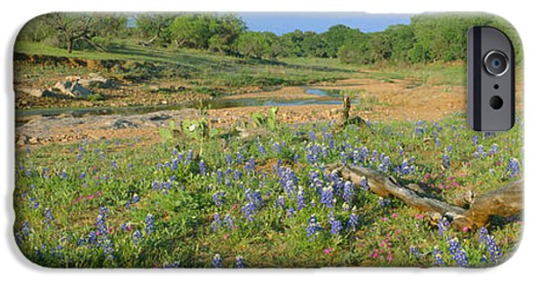 Agricultural iPhone Cases - Blue Bonnets In Hill Country, Willow iPhone Case by Panoramic Images