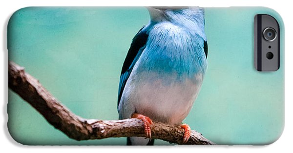 Gary Heller iPhone Cases - Blue Breasted Kingfisher iPhone Case by Gary Heller