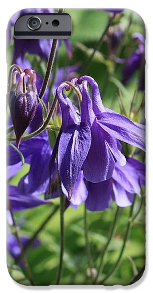 Blue Columbine Flower iPhone Case by Carol Groenen