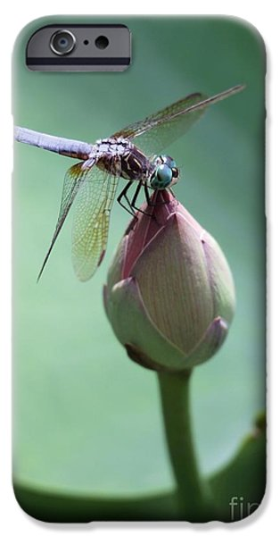 Blue Dragonflies Love Lotus Buds iPhone Case by Sabrina L Ryan