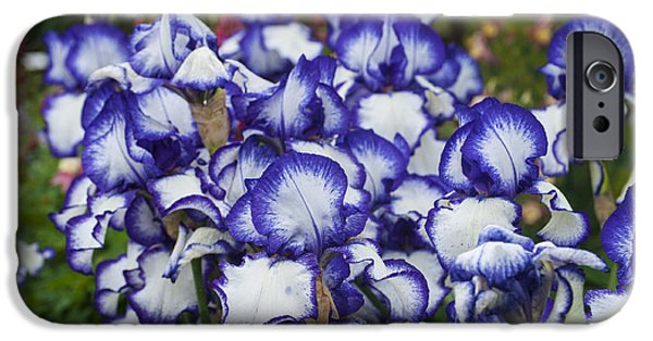 Snake iPhone Cases - Blue edged Iris iPhone Case by Mandy Judson
