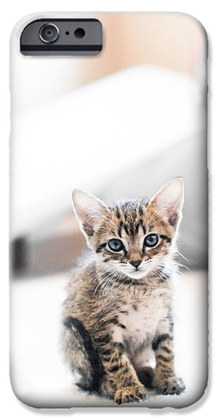 Kitten iPhone Cases - Blue Eyed Kitten iPhone Case by Shelby  Young