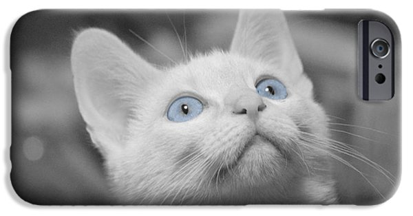 Flame Point Siamese iPhone Cases - Blue Eyes iPhone Case by Sherry Breece