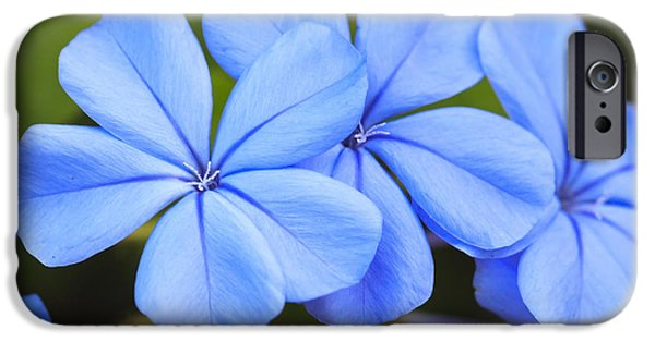 Anther iPhone Cases - Blue Flax iPhone Case by Adam Romanowicz