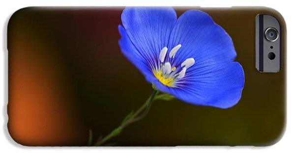 Flower Blossom iPhone Cases - Blue Flax Blossom iPhone Case by Iris Richardson