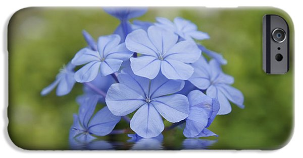Detail Drawings iPhone Cases - Blue Flowers iPhone Case by Aged Pixel