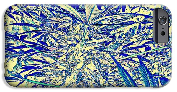 David iPhone Cases - Blue Flowers iPhone Case by David Munoz