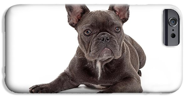 French Bulldog iPhone Cases - Blue French Bulldog Laying iPhone Case by Susan  Schmitz