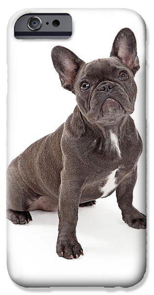 French Bulldog iPhone Cases - Blue French Bulldog  iPhone Case by Susan  Schmitz