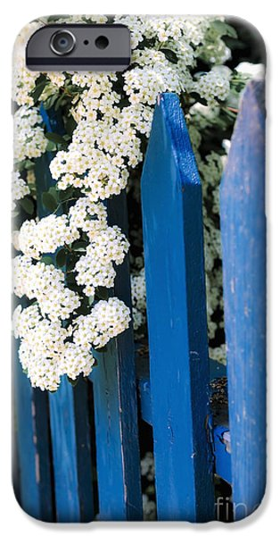 Wreath iPhone Cases - Blue garden fence with white flowers iPhone Case by Elena Elisseeva