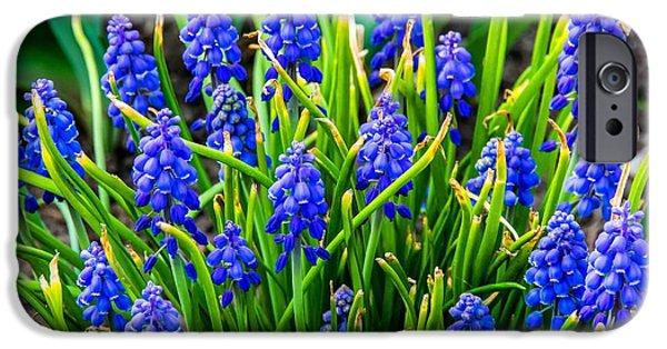 Blue Grapes iPhone Cases - Blue Grape Hyacinth 2 iPhone Case by Steve Harrington