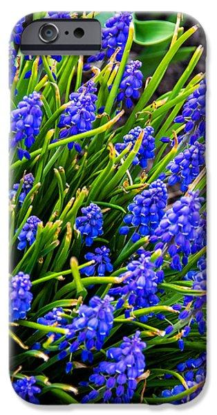 Blue Grapes iPhone Cases - Blue Grape Hyacinth iPhone Case by Steve Harrington
