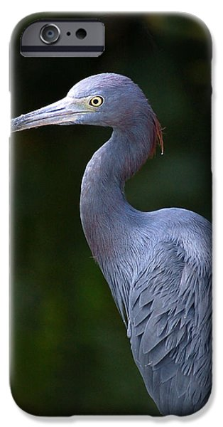 Florida Wildlife iPhone Cases - Blue Heron Florida Bird Watching iPhone Case by Rebecca Brittain