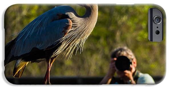 Birds iPhone Cases - Blue Heron Ready for Its Closeup iPhone Case by Andres Leon