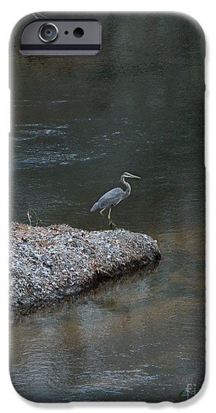 Birds iPhone Cases - Blue Heron iPhone Case by Skip Willits