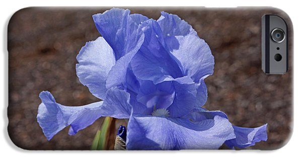 Yellow Bearded Iris iPhone Cases - Blue Iris Flower Art Prints Irises Floral iPhone Case by Baslee Troutman Floral Art Prints