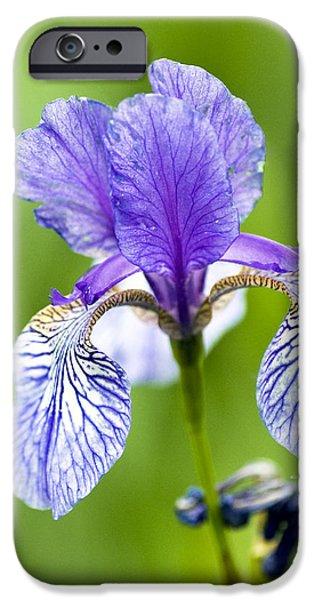 Garden Photographs iPhone Cases - Blue Iris iPhone Case by Frank Tschakert