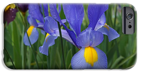 Yellow Bearded Iris iPhone Cases - Blue Irises Flowers Garden Art Prints iPhone Case by Baslee Troutman Floral Photography Art
