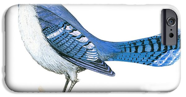 Blue Jay iPhone Cases - Blue jay  iPhone Case by Anonymous