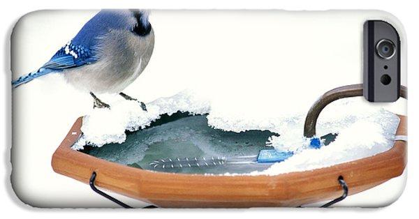 Bluejay iPhone Cases - Blue Jay At Heated Birdbath iPhone Case by Steve and Dave Maslowski