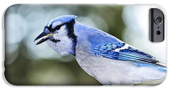 Feeding iPhone Cases - Blue jay bird iPhone Case by Elena Elisseeva