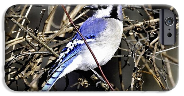 Digital Art Pastels iPhone Cases - Blue Jay Bird  Sitting on a Branch H a iPhone Case by Gert J Rheeders