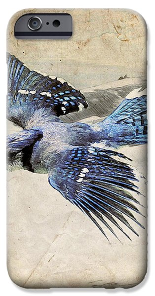 Blue Jay in Flight iPhone Case by Ray Downing