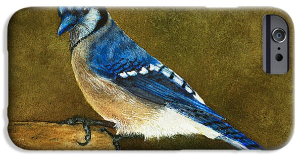 Jay iPhone Cases - Blue Jay iPhone Case by Nan Wright