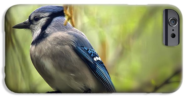 Bluejay iPhone Cases - Blue Jay on a Misty Spring Day iPhone Case by Lois Bryan