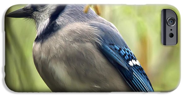 Bluejay iPhone Cases - Blue Jay On A Misty Spring Day - Square Format iPhone Case by Lois Bryan
