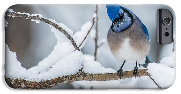 Inexpensive iPhone Cases - Blue Jay iPhone Case by Paul Freidlund