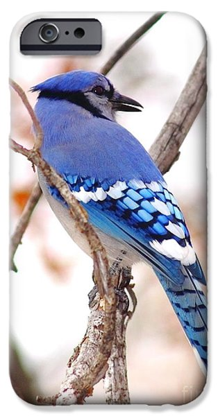 Blue Jay iPhone Cases - Blue Jay iPhone Case by Robert Frederick