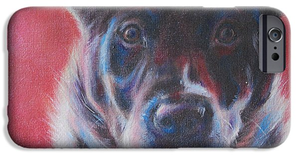 Cattle Dog iPhone Cases - Blue Merle on Red iPhone Case by Kimberly Santini