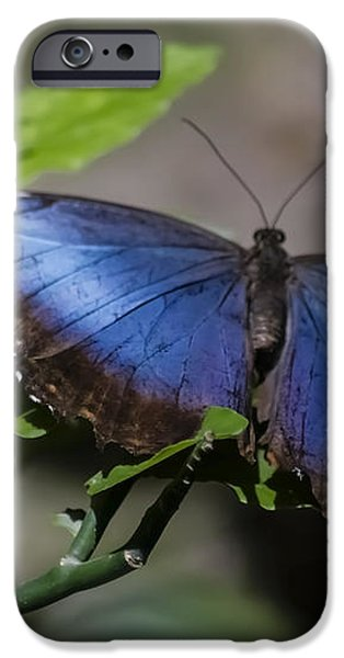 Blue Morph butterfly iPhone Case by Sven Brogren