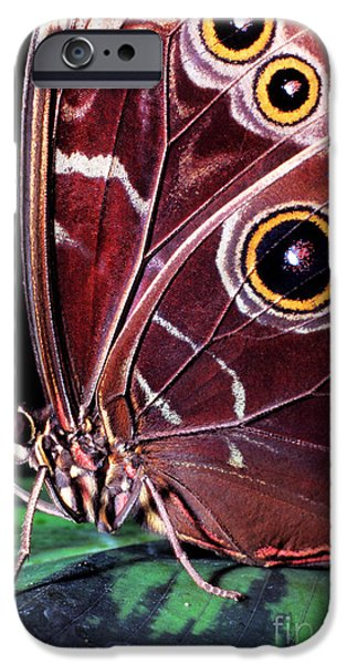 Butterfly Prey iPhone Cases - Blue Morpho Butterfly iPhone Case by Thomas R Fletcher